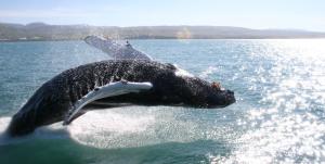Flywhale