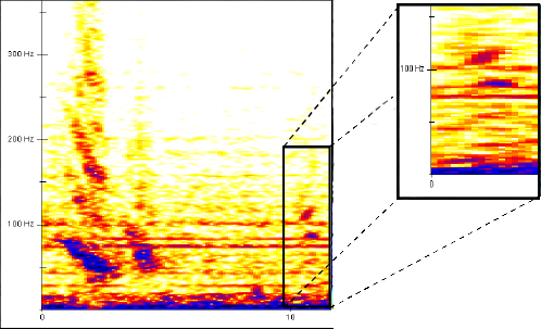 Figure 2: An example of one of the small constant call which often follow a downswept call.