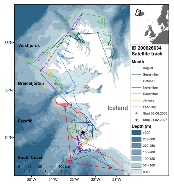 A small map of Iceland with an enlargement of western Iceland showing the movements of a white-beaked dolphin equipped with a satellite transmitter. Transmissions started on 8 August 2006 (green dot, Garður harbor) and stopped on 24 February 2007 (red dot). Different color lines show the distance covered by the tagged animal in different months. The area west and south of Iceland was divided in four parts corresponding to the location: Area 1: The Westfjords, Area 2: Breiðafjörður, Area 3: Faxaflói and Area 4: South Coast. An acoustic A-tag was placed on a second dolphin at the green dot. The acoustic tag was recovered approximately 6 NM northeast of the lighthouse in Garður (the star). (For interpretation of the references to colour in this figure legend, the reader is referred to the web version of this article.)