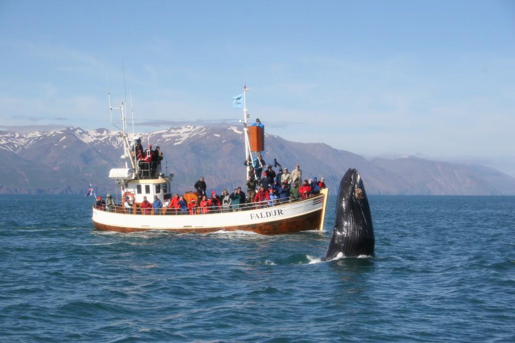 Humpback and boat