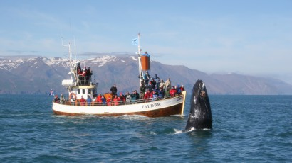 Faldur on a whale watching tour